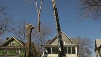 RELIABLE CRANE LTD. (VERY EXPERIENCED AT TREE WORK!)