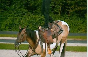 Professional Horse Training - $850/mo. & riding lessons are included.