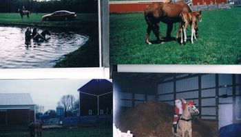 Crystal Springs Stables. Horse Boarding/ Large indoor Arena - $250.00/month