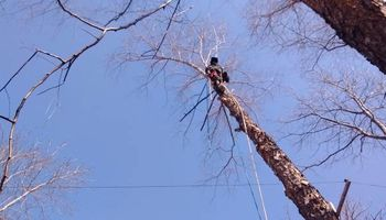 BEST AFFORDABLE TREE SERVICE by DAVE!