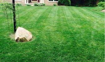 Daniel's Landscape ($25 lawn mowing)