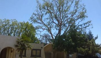 Flavios tree service