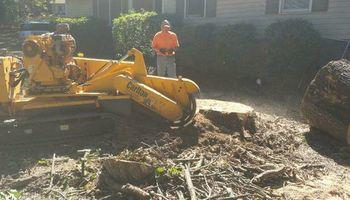 Stump Grinding by Bridges Tree Service!