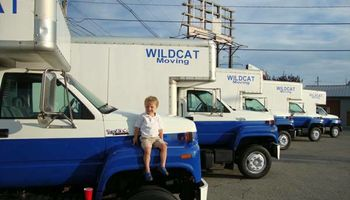 WILD CAT MOVING. CHEAP + CLEAN-CUT