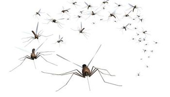 Window bars. Mosquitoes bugging you? We have Mosquito Control!