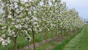 Professional Fruit tree Pruning & Spraying