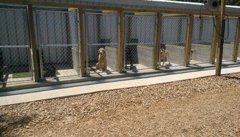 Thomas Dog Boarding Kennels