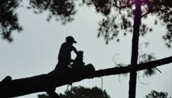 Rocky Top Tree Service & Landscaping