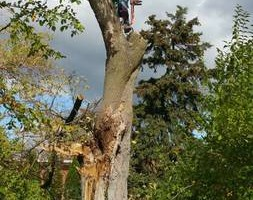 Bj's tree removal and trimming