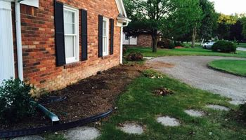 Tree and shrub removal/replacement