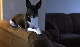 Pet Sitting/Dog Walking/In Home Dog Bathing/Pooper Scooper
