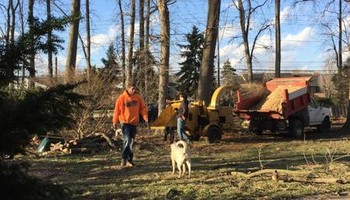 Fallen Timbers Complete Tree Care