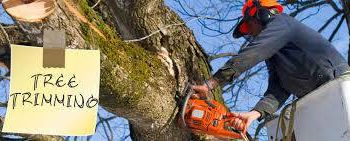 Bruce's Tree Service