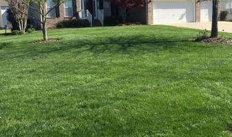 Sanchez landscaping NC.