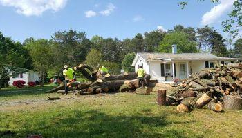 A & B Tree Expert ( fully insured )