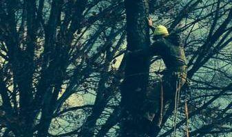ARBORIST/CLIMBER from Arbor Sense Tree Care and Trimming