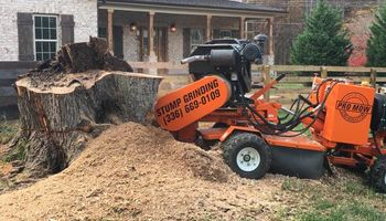 STUMP GRINDING by Bryan Derr