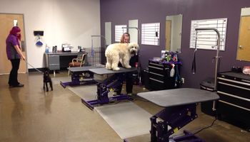 Furr Pet Spa and Wellness