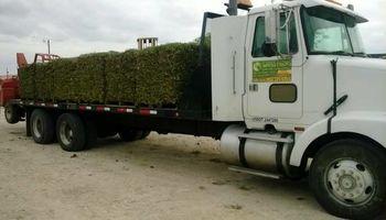 L&H GRASS FARMS 100% CLEAN NO MIX GREEN GUARANTEED...