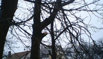 Tree Works Tree Trimmings &Removal Services, Lowest price