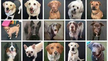 Bandilane Dog Daycare, Home pet sitting, Grooming & Training