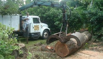 ABE's Tree Care and Stump Grinding