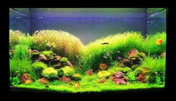 AQUARIUM SERVICES AND AQUARIUM LEASING!