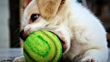 Central Pet Tucson. Doggy Daycare