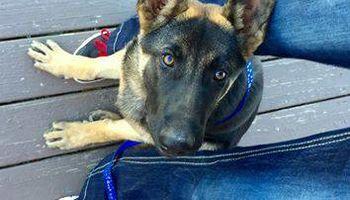 Good Boy! Professional Dog Training