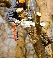 TREE TRIMMING! Arborist Heights Professional. Tree Care Service.