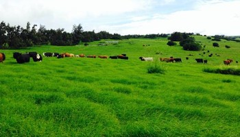 Quality Ranch Fencing, Land Clearing & Mowing