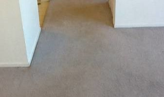 TRU SHINE. CARPET STEAM CLEANING (PRICES LISTED)