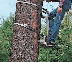 Redmond Tree Service. Tree Pruning & Tree Removal