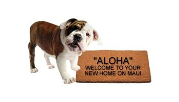 At Home Animal Hospital offers Quarantine & Direct Release Services