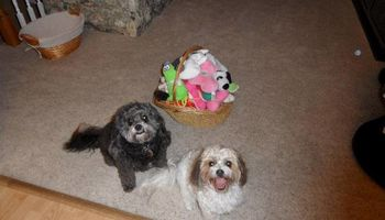 Pet sitting in Wailea, Maui Meadows, Kihei, and surrounding areas.