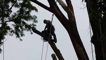 Tree Removal & Trimming at a great price