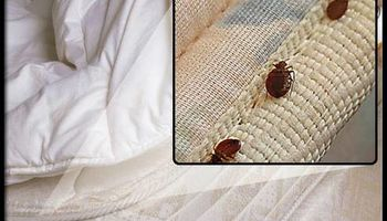 Do you have a bedbug problem?  BEDBUG BUSTERS USA