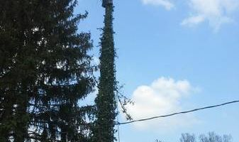 Tree Service - prune & trim & removal