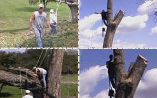 TOM MATTINGLY'S EXPERT TREE SERVICE