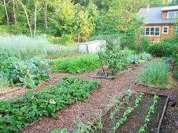 Veggie Gardens The Easy Way