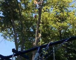 Stillwell's Tree Service At Affordable Prices