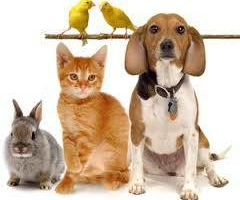 Pet Sitter!