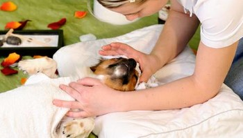 Puppalicious Pet Spa. Small Dog: starting at $35