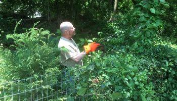 Invasive vine/weed control