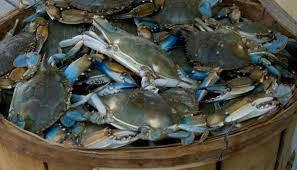 CRABMAN Blue Crabs and Shrimp