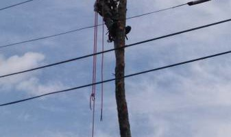 CANDY´S TREE SERVICE. BEST AFFORDABLE PRICES! CALL NOW!