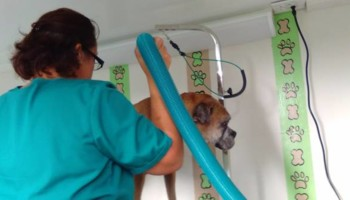 Convenient Mobile Dog Grooming