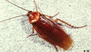 Pest Control, Lawn spraying, Termites - Ed the bug man