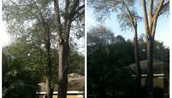 TREE TRIMMING. ASAP-NO HASSLE/FLAT RATE TREE WORK !