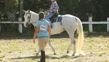 Horseback Riding Lessons/ Horse Training